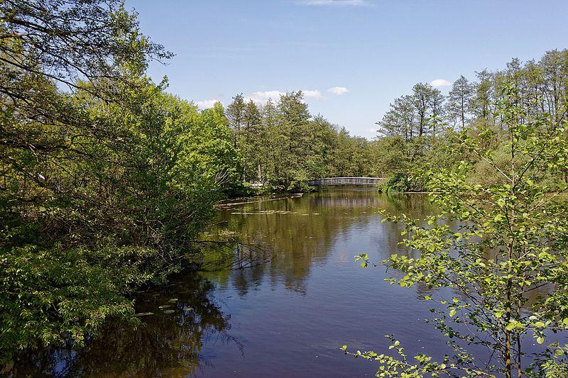 Heute, 5. August: Baumerlebnisführung – Wilhelmsburger Inselpark – 14 Uhr